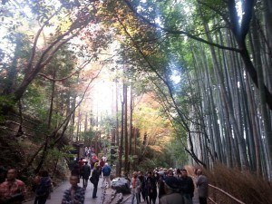 Small Group Tours to Japan