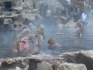Snow monkeys near Nagano